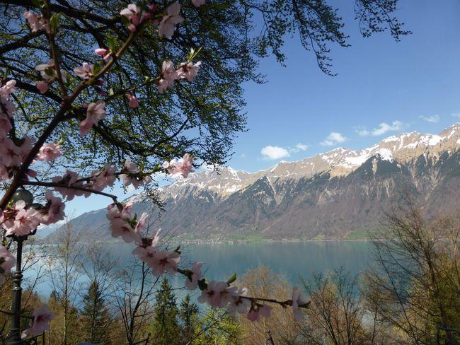 Frühling EyeEmNewHere Spring Time Switzerland🇨🇭 Tree Plant Mountain Scenics - Nature Tranquil Scene Nature Lake Idyllic Mountain Range