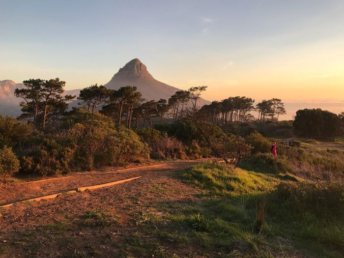 South Africa Cape Town Cape Town, South Africa Signal Hill Plant Sky Beauty In Nature Tree Mountain Sunset Scenics - Nature Landscape Growth Nature Tranquil Scene Tranquility Environment Land Field Non-urban Scene Idyllic Orange Color Sunlight