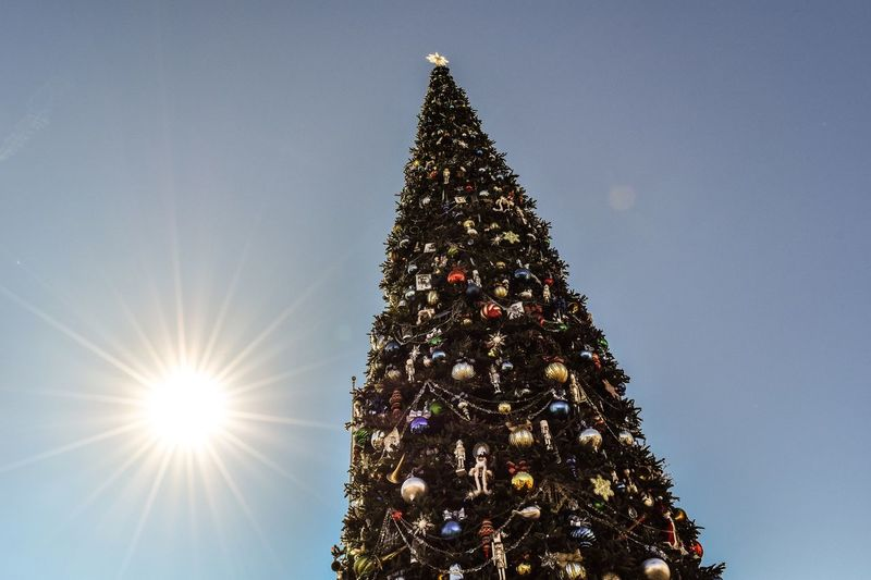 Tb to Christmas Joy. Holiday Trees First Eyeem Photo