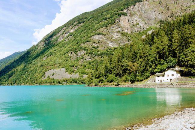 Lago di Poschiavo on a summerday Lago Di Poschiavo Graubünden Schweiz Switzerland🇨🇭 EyeEm Selects The Great Outdoors - 2018 EyeEm Awards Outdoor Summer Natur Tree Water Mountain Forest Tree Area Lake Pinaceae Rock - Object Pine Tree Idyllic