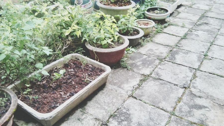 My little garden ❤ First Eyeem Photo