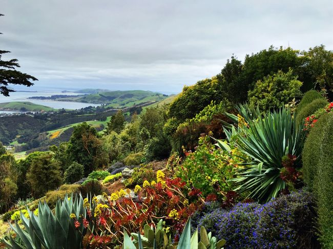 Dunedin from view point at Potobello garden down the hillsides. Nature Tranquil Scene Mountain Landscape Cloud - Sky Beautifully Organized Flower