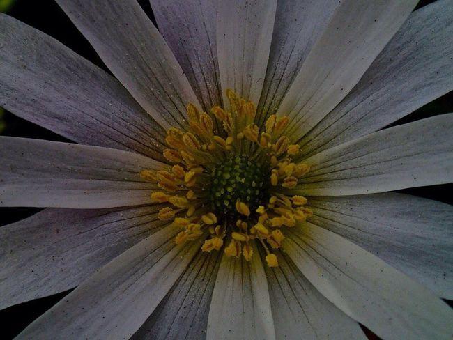 Flowers Flower Kaukenhof Holandia Holand