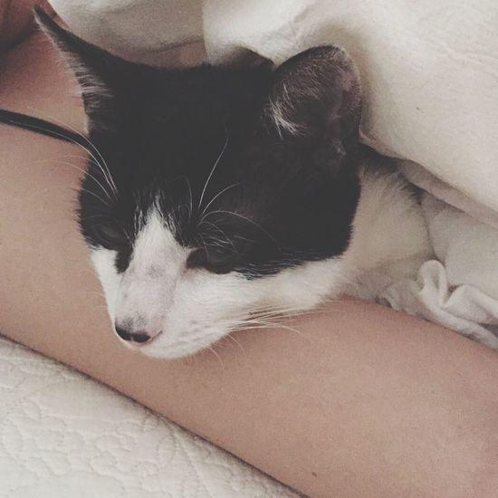 朝目が覚めたら、 腕まくら してた♡💤 雨ちゃん こねこ しろくろネコ ハチワレ