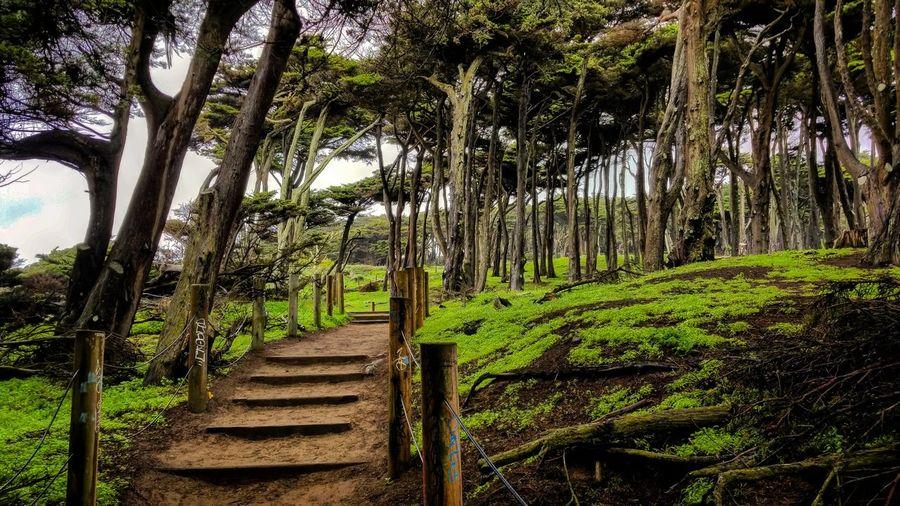 Steps Trail