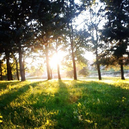 Paskutinis Vasaros Penktadienis :( Sad Last Summer Friday Sun Green Park