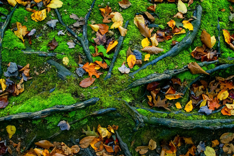Autumn leaves on tree roots. Autumn Beauty In Nature Colorful Foliage Green Color High Angle View Leaf Leaves Nature No People Outdoors Tree Roots