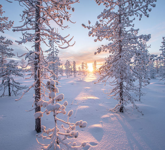 Snow covered trees on field against sky during sunset