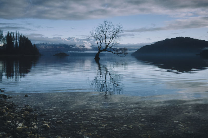 That Wanaka Tree - South Island of New Zealand Water Sky Cloud - Sky Tree Tranquil Scene Tranquility Reflection Scenics - Nature Beauty In Nature Lake Nature Bare Tree Plant No People Non-urban Scene Waterfront Idyllic Mountain Outdoors Thatwanakatree New Zealand South Island Winter Calm Reflection