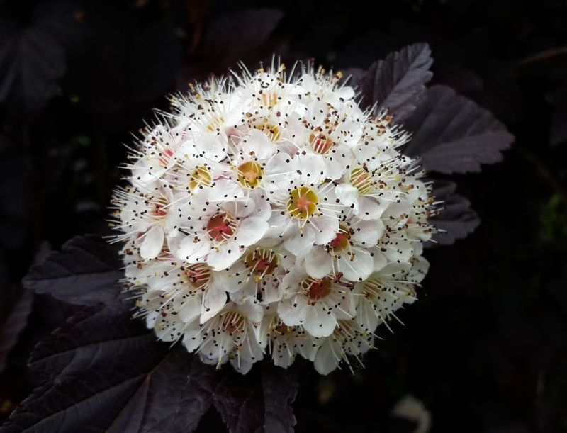 Humble beauty Flower Head Flower Uncultivated Springtime Closing Petal Multi Colored Close-up Plant Blossom Wildflower Plant Life Botany