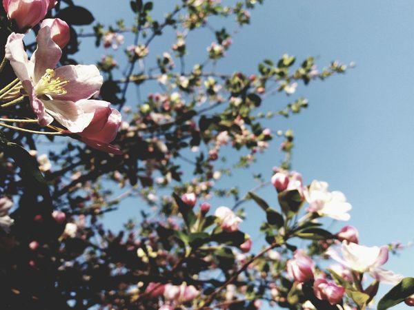 Flower Head Tree Branch Petal Pink Color Twig Plum Blossom