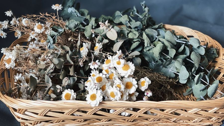 High angle view of flowering plant in basket