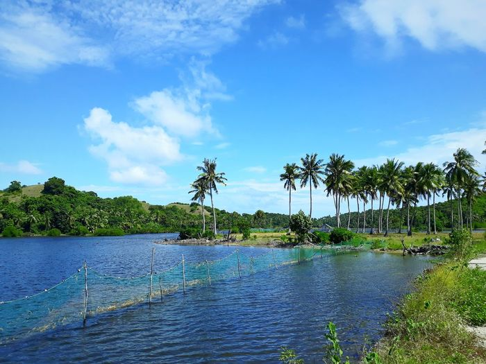 Tree Water Palm Tree Blue Tropical Climate Sky Travel Landscape Coconut Palm Tree Palm Leaf Coconut Tropical Tree