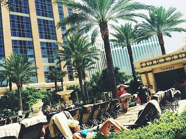 Vegas  Vegasbaby Palm Tree Outdoors Poolside Navada IPhoneography Tree Vegas Life Vegas  Vegasattraction Hotel