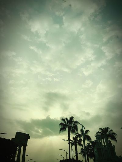 Mersin Turkey Cloud - Sky Sky Tree Low Angle View Plant Nature No People Silhouette Architecture Palm Tree Beauty In Nature Day Tranquility Built Structure Outdoors Scenics - Nature Tropical Climate Building Exterior Growth