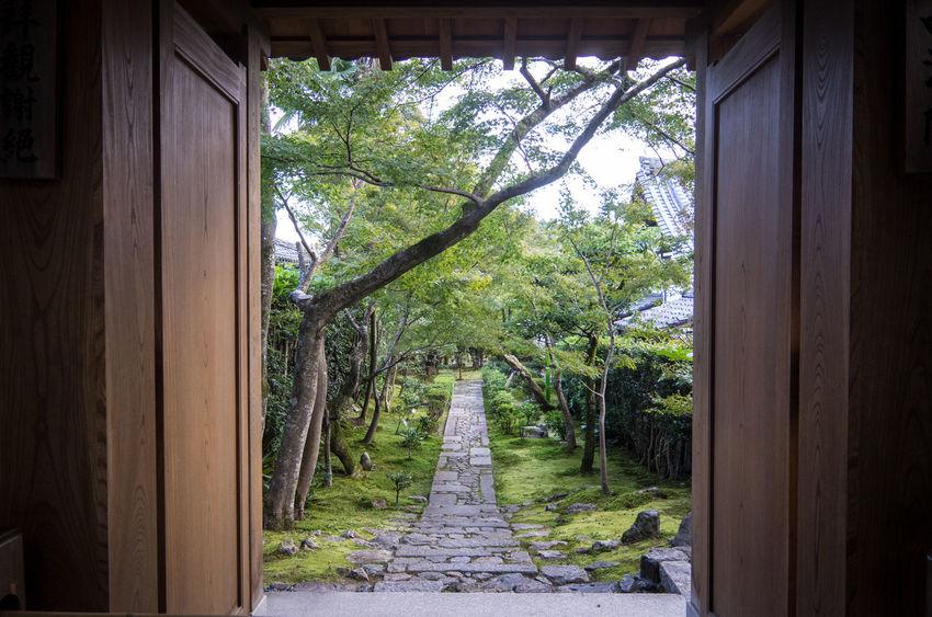 Buddism Garden Japan Japan Photography Kyoto Ryonji