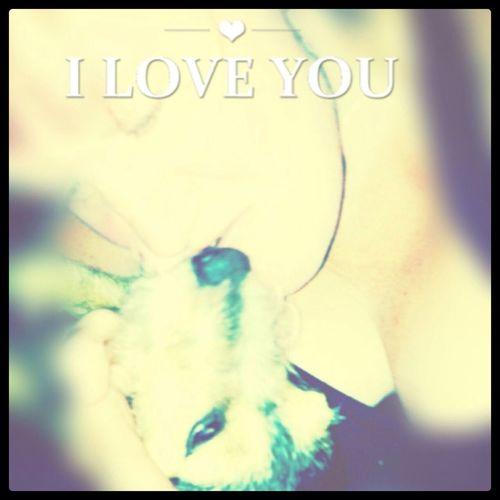Mydog♡ Dog Iloveyou That's Me