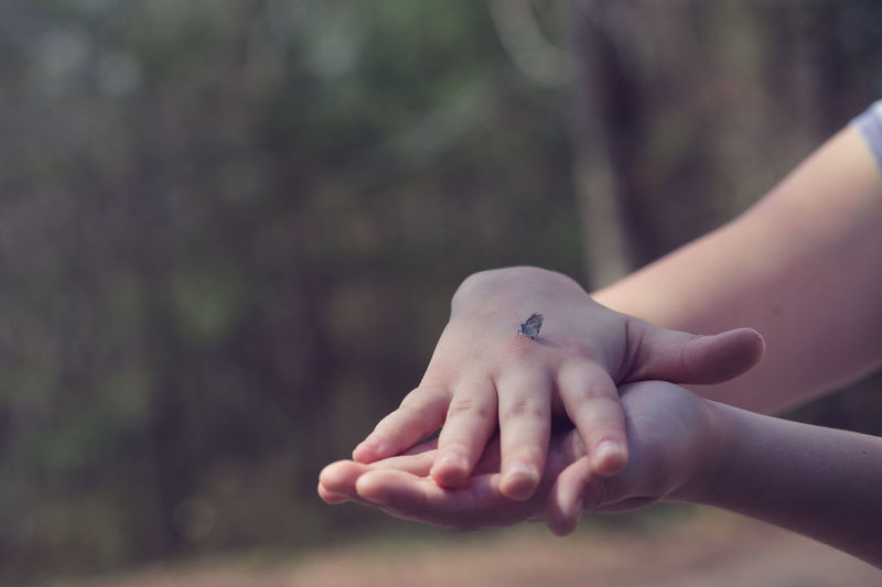 Cropped Image Of Hands Holding Butterfly