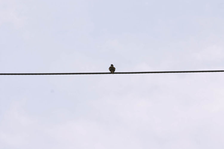 Animal Themes Animals In The Wild Bird Cable Clear Sky Copy Space Day Low Angle View Nature No People One Animal Outline Perching Silhouette Sky Wildlife Zoology