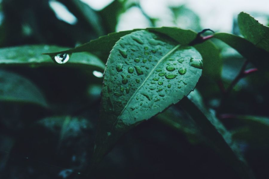 Beauty In Nature Close-up Day Drop Freshness Green Color Growth Leaf Nature No People Outdoors Plant Water