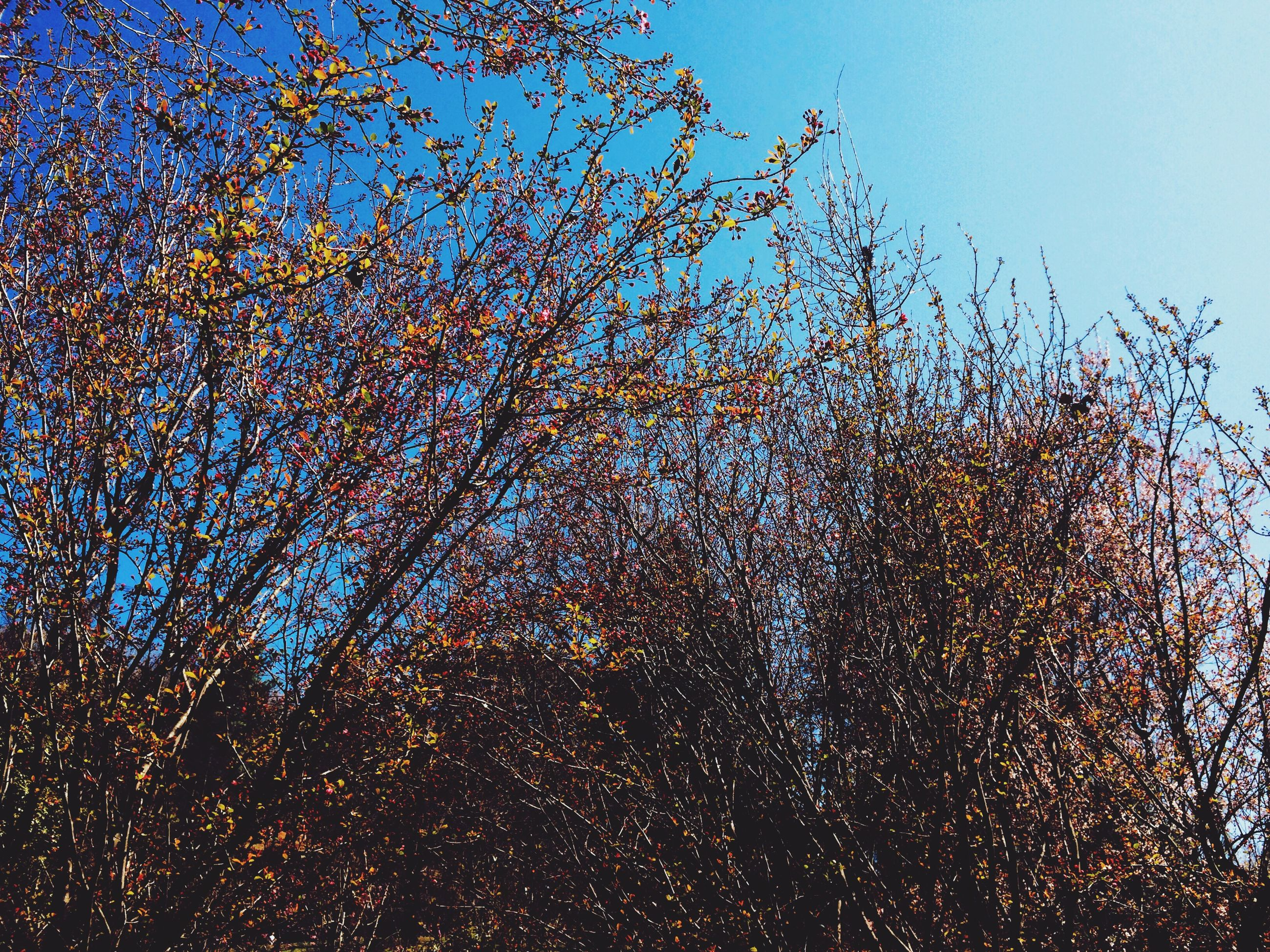 tree, clear sky, low angle view, blue, growth, branch, sky, nature, sunlight, beauty in nature, day, outdoors, tranquility, no people, bare tree, plant, leaf, growing, close-up, freshness