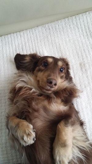 Dog 愛犬 Dog Love