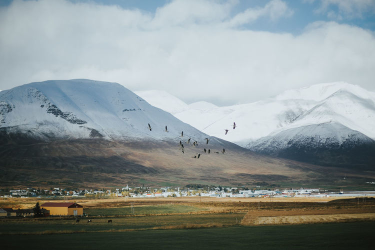 Iceland Beauty In Nature Birds Cloud - Sky Cold Temperature Day Field Flying Landscape Livestock Mountain Mountain Range Nature Roadtrip Scenics Sky Snow Sunlight And Shadow Town Tranquil Scene Tranquility Travel Destinations Winter Go Higher