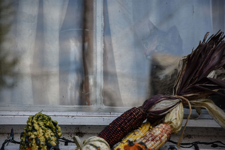 Close-Up Of Vegetables On Window Sill