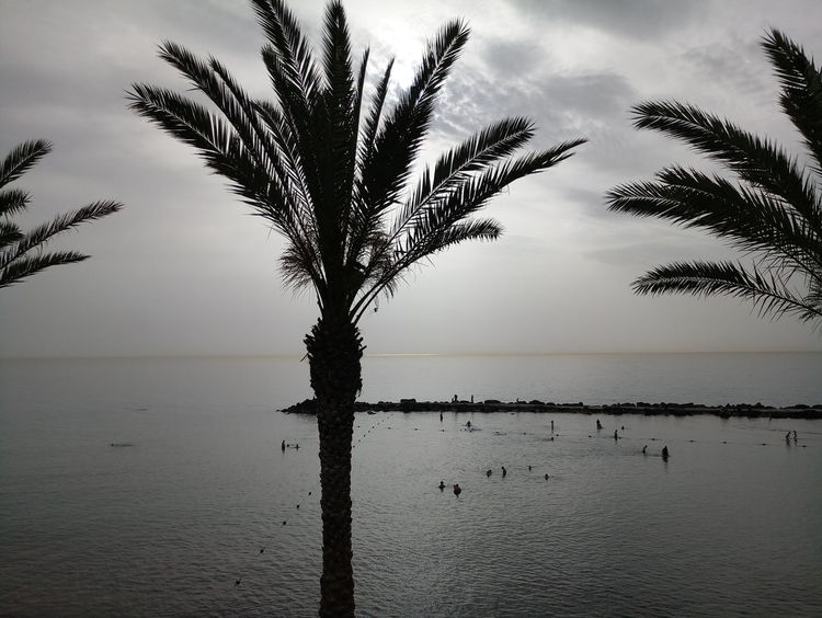 Tree Water Lake Rural Scene Palm Tree Reflection Fog Sky Horizon Over Water Landscape
