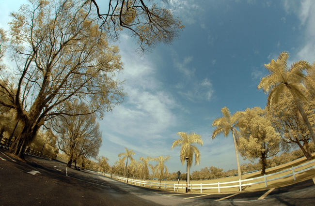 Infra red Tree Cloud - Sky Road Bare Tree Outdoors Branch Nature Polo Field Fish-eye Lens