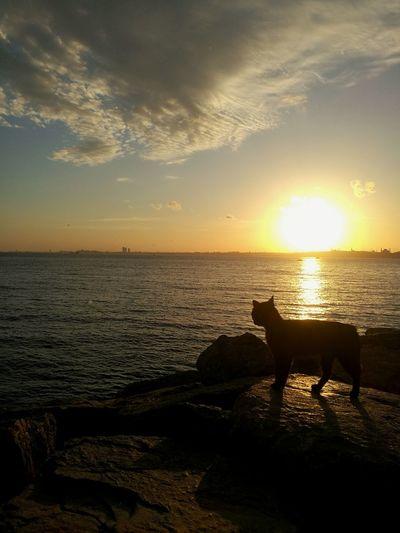 EyeEnOnInstagram EyeEm Nature Lover EyeEm Best Shots EyeEm Selects Cat Sunset Water Sea Swimming Sunset Beach Pets UnderSea Sun Reflection Sunlight Atmospheric Mood Coastline Romantic Sky Rocky Coastline Moody Sky