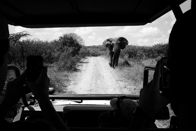 Animal Approaching BIG Big Five Car Ears Elephant Fuji X100s Game Reserve Hluhluwe National Park Nature Photographing Safari South Africa Tourism Travel Vacation Wildlife