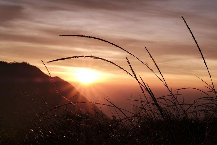 Silhouette of stalks against sunset sky