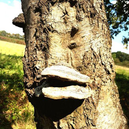 Plant Day Tree Nature Art And Craft Human Representation Representation