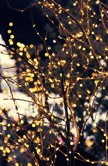 Trees decorated with an abundance of fairy lights for the Holiday season. Celebration Christmas December Holiday Season Holidays Lights Magical Out Of Focus Xmas Bokeh Celebrate Christmas Tree Decoration Fairy Lights Festive Glittery Illuminated Night Sparkly