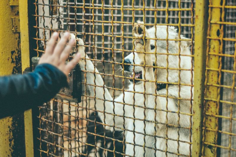 Human hand in cage at zoo