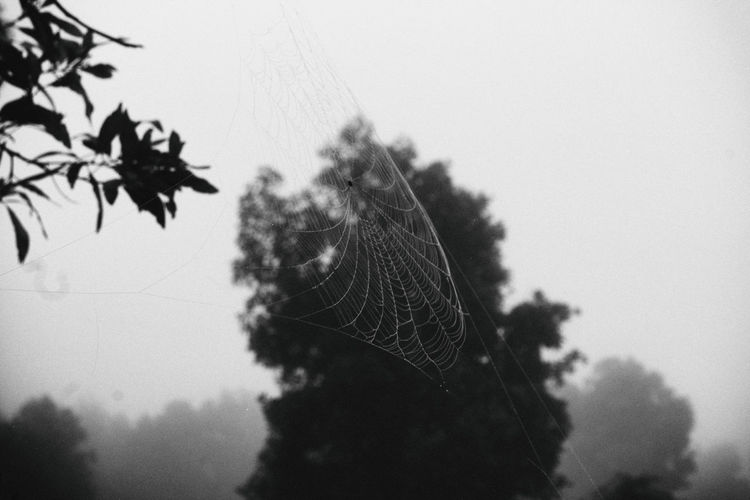 Close-up of spider web on tree against sky