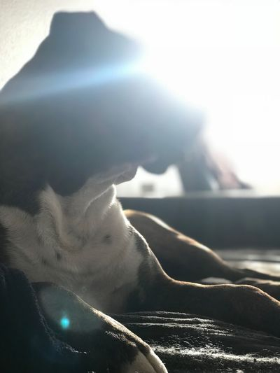 Hund Köpek Dog❤