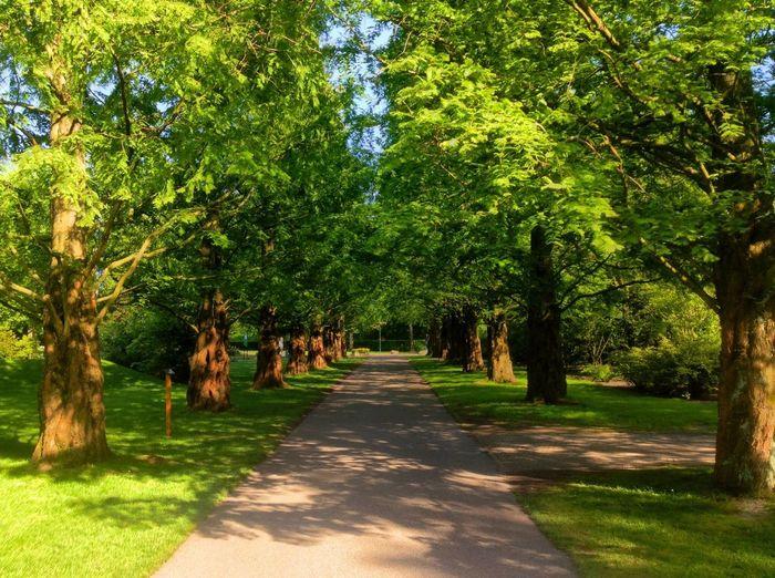 Avenue (Not, The,) HDR Flowers Keukenhof Lisse