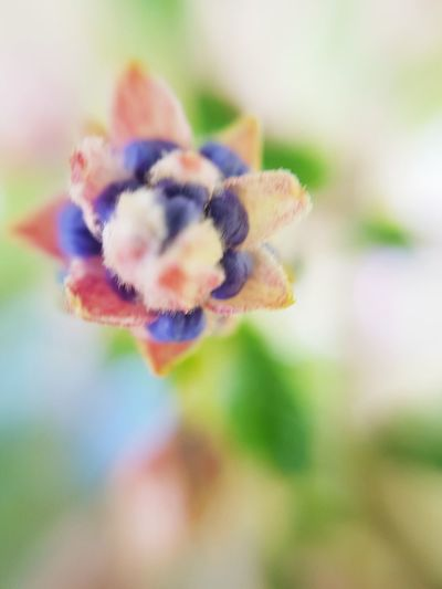 Close-up of flower against blurred background