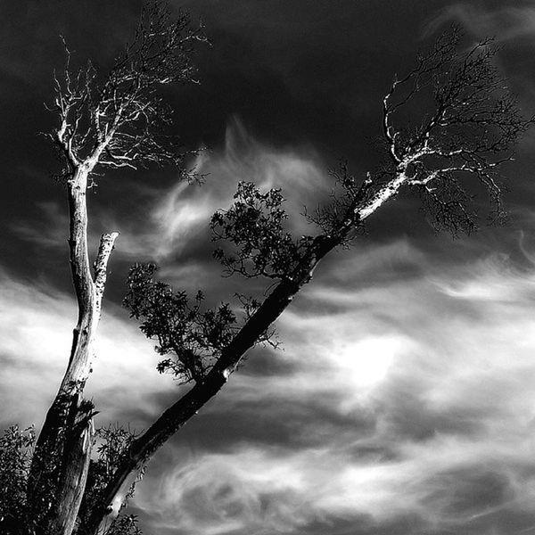 Tree MagnoliaTree Clouds Cloudporn sky skyporn bnw blackandwhite monochrome treebranches autumn architecture nature