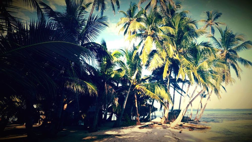 Marlytravel Paradise Beach SanBlasIslands Travelaround Nature Palm Tree