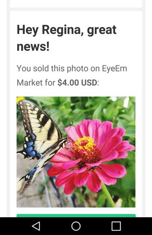 First photo to sell on EyeEm!! 🙏🙏💕 Flower Nature Celebrate! Zinnia  Tiger Swallowtail Butterfly Tiger Swallowtail EyeEm Best Shots Taking Photos
