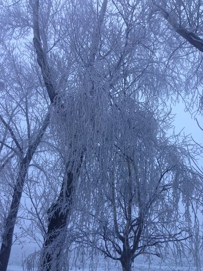 Tree Branch Bare Tree Winter Snow Low Angle View Cold Temperature Plant No People Tranquility Beauty In Nature Sky Day Nature Scenics - Nature Outdoors Land Trunk Tree Trunk Snowing Tree Canopy