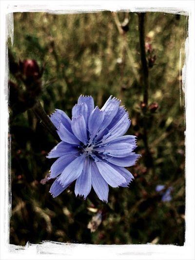 A violet I've found in my garden. Almost walked past.# violet, #flower, #picoftheday, #bestpic, #goodmood, #smileoneveryface Flower Bestpic Picoftheday Flowerporn