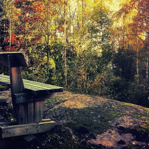 Autumn Colours Wooden Bench On The Cliffs In The Woods 43 Golden Moments