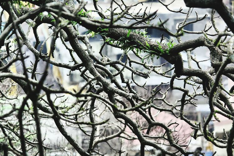 Tentacles of life Tree Nature Branch Outdoors Beauty In Nature Close-up Cold Temperature Sky