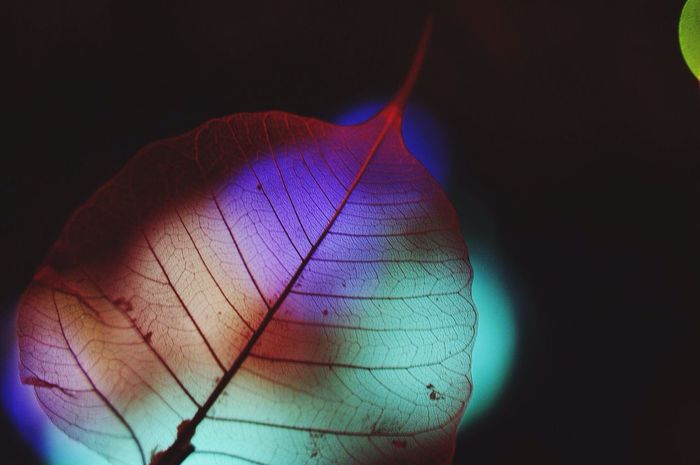 Nature Game Of Light Lights Leaf Colors Nikonphotography Glitch EyeEmNewHere