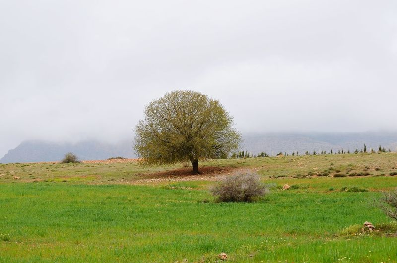 Nature Great Morocco Hugging A Tree Lonely Tree Tree Green Oujda Jerada