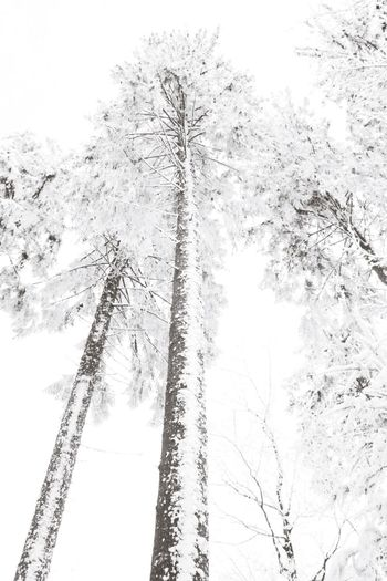It's Cold Outside Winter Trees Nature On Your Doorstep White Trees Blackforest Hotzenwald WhiteCollection Snow ❄ Winter Wonderland